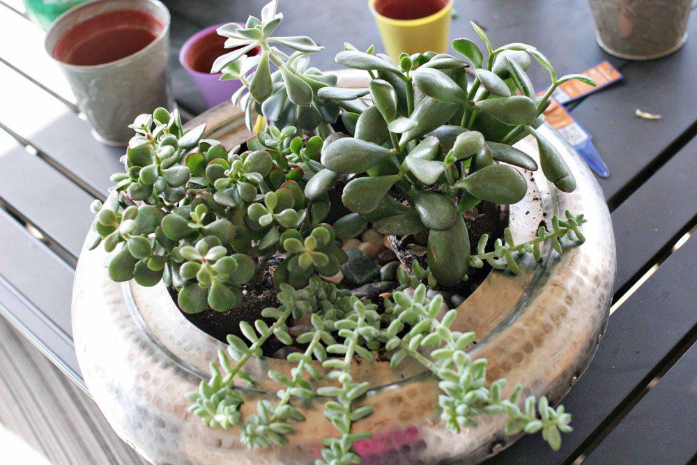 craftivity designs succulent planter sm03