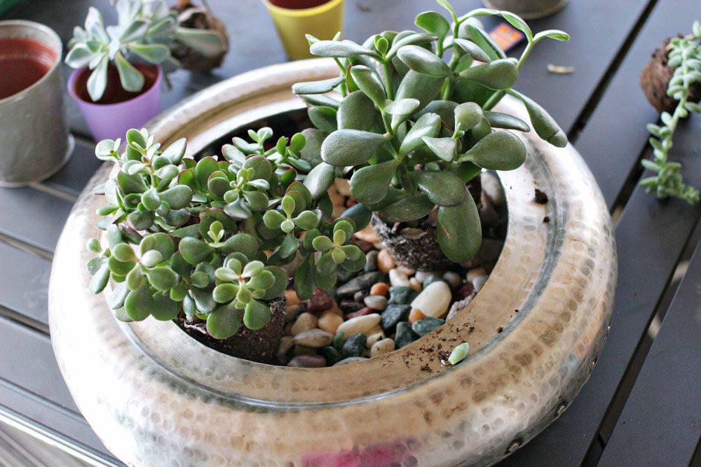 craftivity designs succulent planter sm04