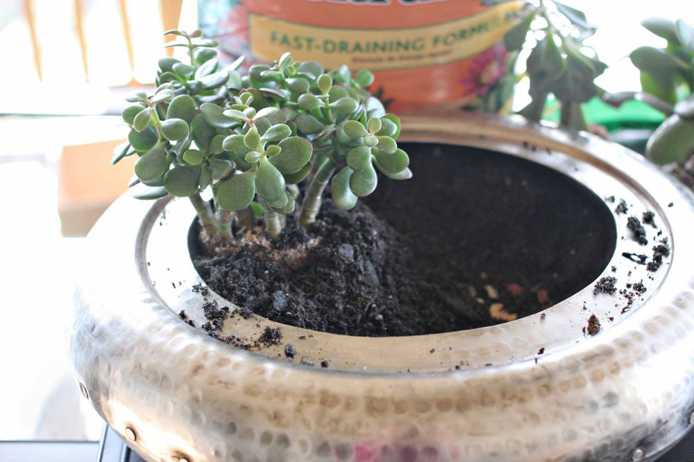 craftivity designs succulent planter sm06