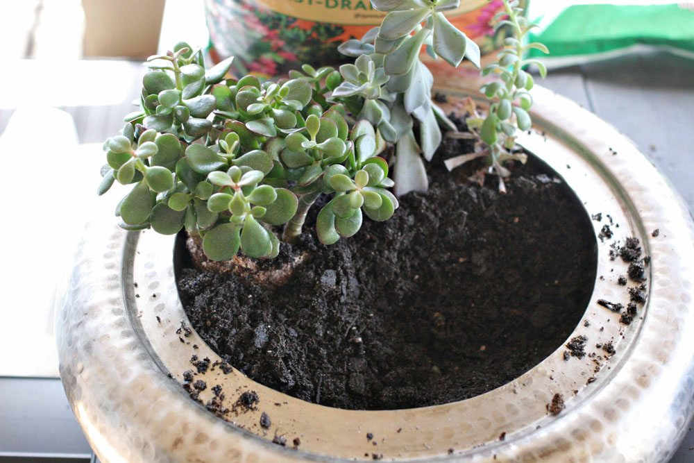 craftivity designs succulent planter sm07