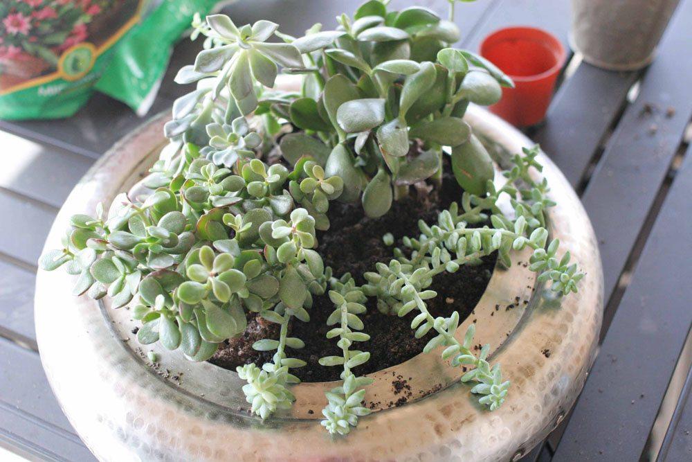 craftivity designs succulent planter sm09