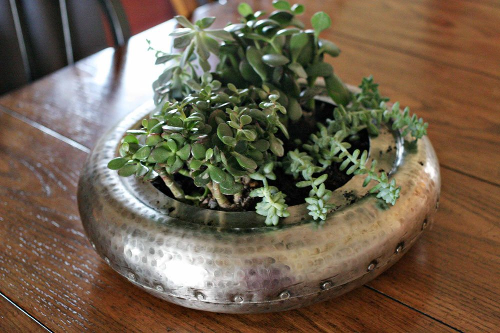 craftivity designs succulent planter sm11
