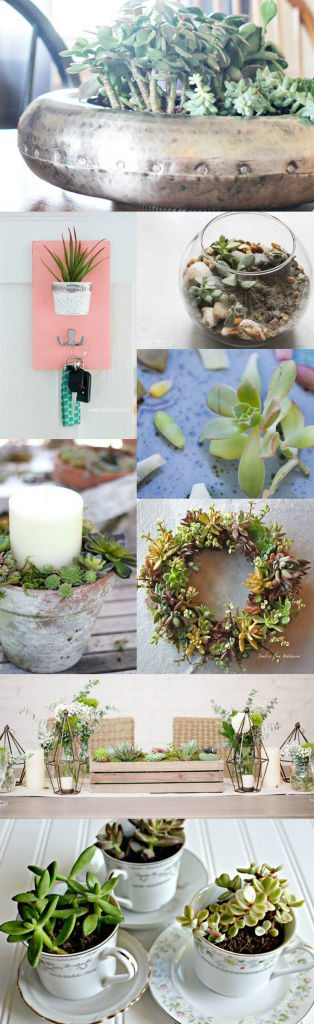 8 Succulent Projects // Kick Off Friday - Inspiration and Projects for the Weekend