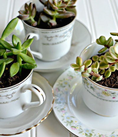 8 Succulent Projects