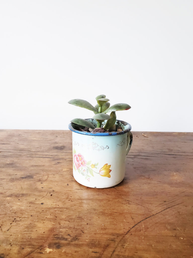 Use a Tin Cup as a Vintage Planter for an Indoor Plant