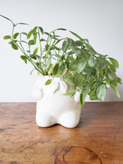 Use a Cookie Jar as a Vintage Planter for an Indoor Plant